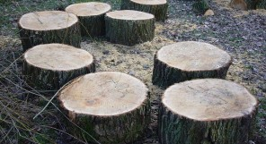 Tree stumps